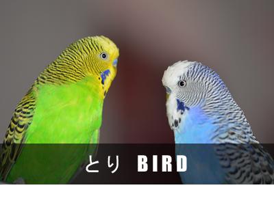 ヴィンテージジュエリー鳥