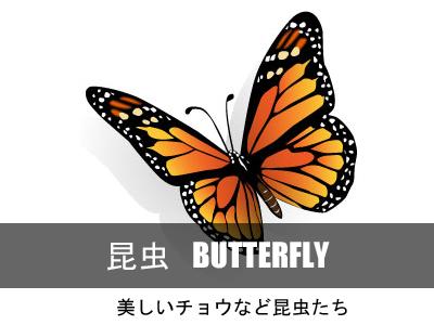 蝶バタフライ昆虫