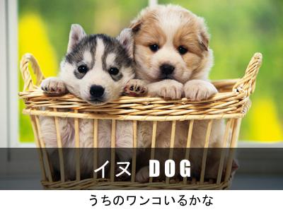 犬イヌいぬ