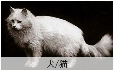 アンティークポストカード犬猫